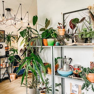 Home plantscaping